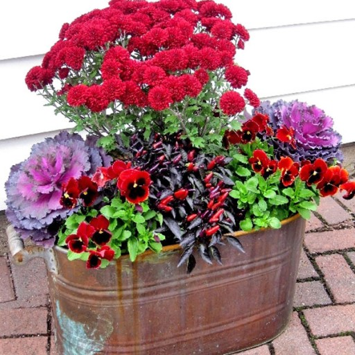 Fall Autumn Annuals, Beautiful Container Planter Display Ideas, Mums, Kale, Pansies, Ornamental Peppers