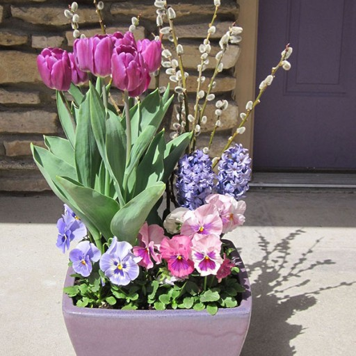 Spring Purple Bulbs, Beautiful Container Planter Display Ideas, Tulips, Hyacinth, Pansies, Pussy Willows